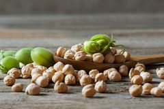 Uncooked dried chickpeas in wooden spoon with raw green chickpea pod plant on wooden table. Heap of legume chickpea background royalty free stock photos