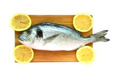 Uncooked fish dorado on wooden board. Isolated Royalty Free Stock Photo