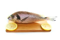 Uncooked fish dorado on wooden board. Isolated Royalty Free Stock Photos