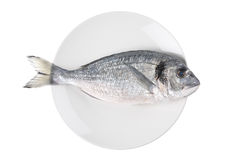 Uncooked fish (sparus auratus)on a plate stock images