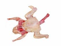Uncooked gołębi ptak. Odosobniony. Obrazy Stock