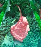 Tomahawk Steak. This uncooked huge tender tomahawk Steak is ready for the grill stock photography