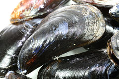 Uncooked Mussels Royalty Free Stock Photography