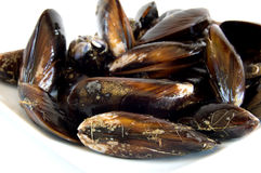 Uncooked mussels Royalty Free Stock Photo