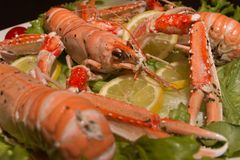 Uncooked Orange Lobsters, Aquatic Crustaceans inside White Tray royalty free stock photo
