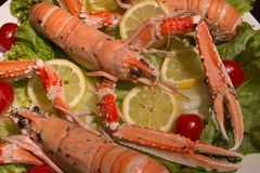 Uncooked Orange Lobsters, Aquatic Crustaceans inside White Tray Stock Image