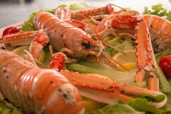 Uncooked Orange Lobsters, Aquatic Crustaceans inside White Tray stock photos