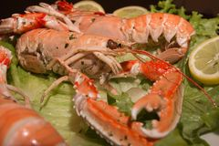 Uncooked Orange Lobsters, Aquatic Crustaceans inside White Tray stock photo