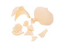 Uncooked pasta lumaconi. Stock Image