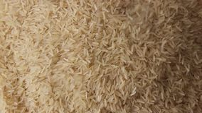 Uncooked plain rice grains stock footage