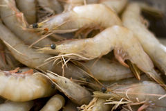 Uncooked Prawns Stock Photo