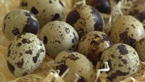 Uncooked quail eggs in pack. Rotating and closeup. Nobody. Uncooked quail eggs in pack. Rotating and closeup stock video footage