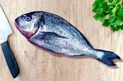 Uncooked raw sea bream fish on chopping board top view. Uncooked or raw sea bream fish on chopping board top view Royalty Free Stock Images