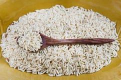 Uncooked rice grains Stock Photos