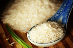 Uncooked rice Stock Image