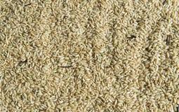 Uncooked ryżowa tekstura Fotografia Royalty Free