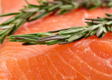 Uncooked salmon Royalty Free Stock Photography