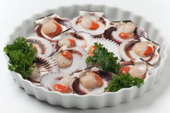 Uncooked scallops Stock Photography