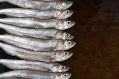 Uncooked smelt fish Stock Photo