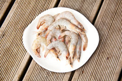Uncooked tiger prawns on plate Stock Images