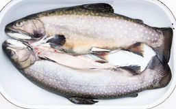 Uncooked Trouts in Roasting Pan Stock Photos