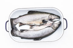 Uncooked Trouts in Roasting Pan Stock Image
