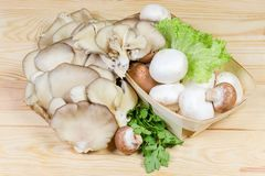 Uncooked various cultivated mushrooms and greens on wooden rustic table. Cultivated raw different champignon mushrooms in wooden basket and oyster mushrooms with royalty free stock images