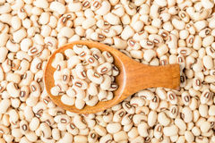 Uncooked white cow pea beans in wooden spoon Stock Images