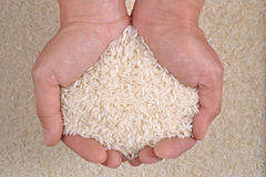 Uncooked white rice in the hands Stock Photography