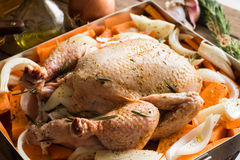 Uncooked whole chicken in baking form with chopped vegetables carrots sweet potatoes onions, seasoned Royalty Free Stock Photography