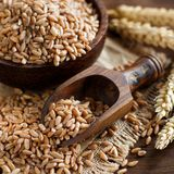 Uncooked whole spelt grain in a bowl with spelt ears Royalty Free Stock Photo