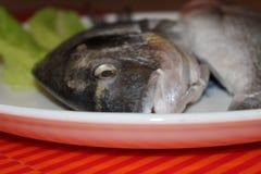 Uncooking鱼 免版税图库摄影