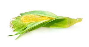 Uncovered green raw corn Stock Photography
