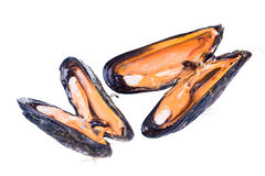 Uncovered raw California mussel (Mytilus californianus). Isolate Royalty Free Stock Images