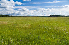 Uncultivated countryside field Stock Photos