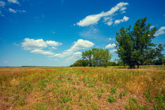 Uncultivated field with trees. On background and blue sky Royalty Free Stock Photography