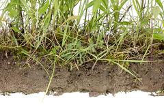 Uncultivated soil isolated fragment Stock Photos
