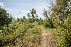 Path through Uncultivated Land. Uncultivated tropical mountain landscape with coconut palm trees and native plants under a blue sky with clouds on Dravuni Island Stock Photo