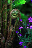 Uncurling Fern and flower. On the forest floor Royalty Free Stock Photos