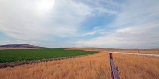 Uncut Alfalfa field in Montana USA Stock Photography