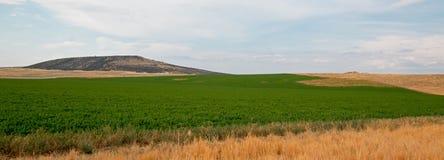 Uncut Alfalfa field in Montana USA Stock Photo