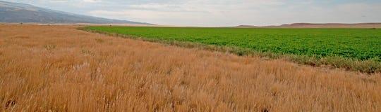 Uncut Alfalfa field in Montana USA Royalty Free Stock Photos