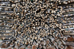 Uncut firewood Stock Images