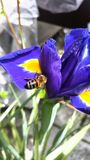 Und Bienen de Blumen Fotografía de archivo libre de regalías