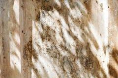 und weißes abstraktes Hintergrund textuer von Schatten treiben auf einer Betonmauer Blätter Lizenzfreie Stockbilder