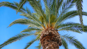 Under the Palm tree background Stock Photography