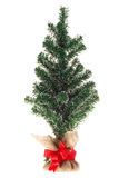 Undecorated Christmas Tree Stock Photo