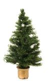 Undecorated Christmas tree. On a white background Royalty Free Stock Images