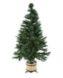 Undecorated christmas tree Royalty Free Stock Photo