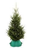 Undecorated Christmas Tree in Green Plastic Stand Royalty Free Stock Photography